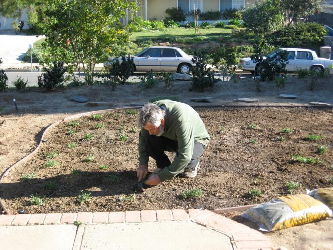 Ian planting St. Augustine