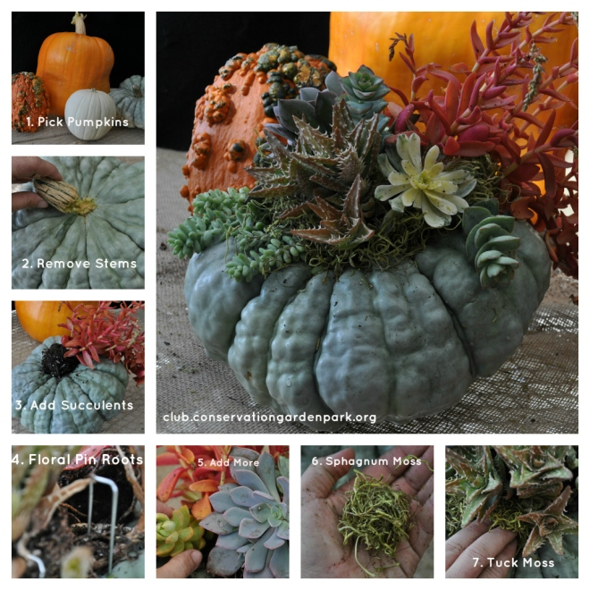 succulent-pumpkin-instructions-collage1